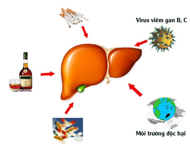 nhận biết gan nhiễm độc